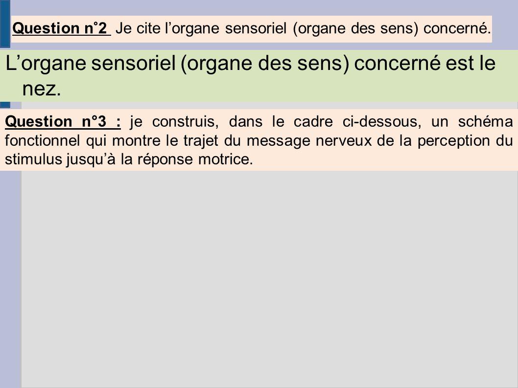 Question n°2 Je cite l'organe sensoriel (organe des sens) concerné.