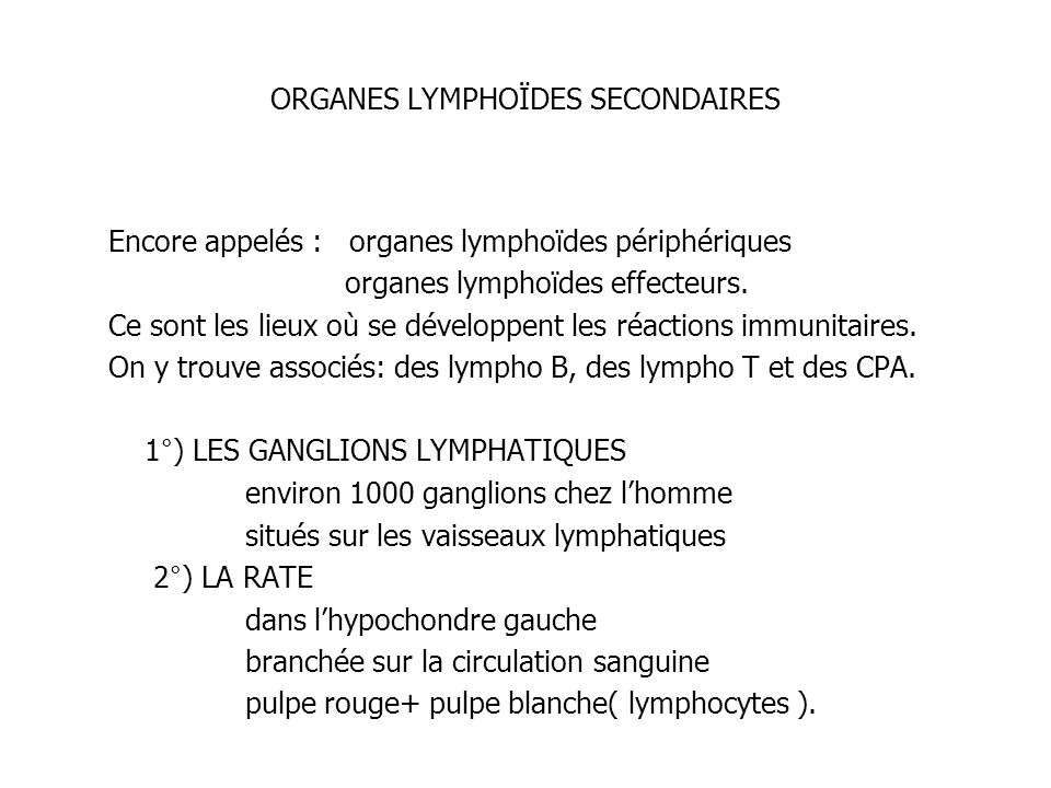 ORGANES LYMPHOÏDES SECONDAIRES