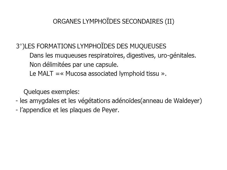 ORGANES LYMPHOÏDES SECONDAIRES (II)