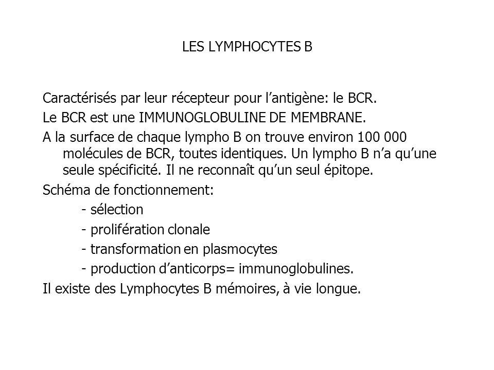 LES LYMPHOCYTES BCaractérisés par leur récepteur pour l'antigène: le BCR. Le BCR est une IMMUNOGLOBULINE DE MEMBRANE.