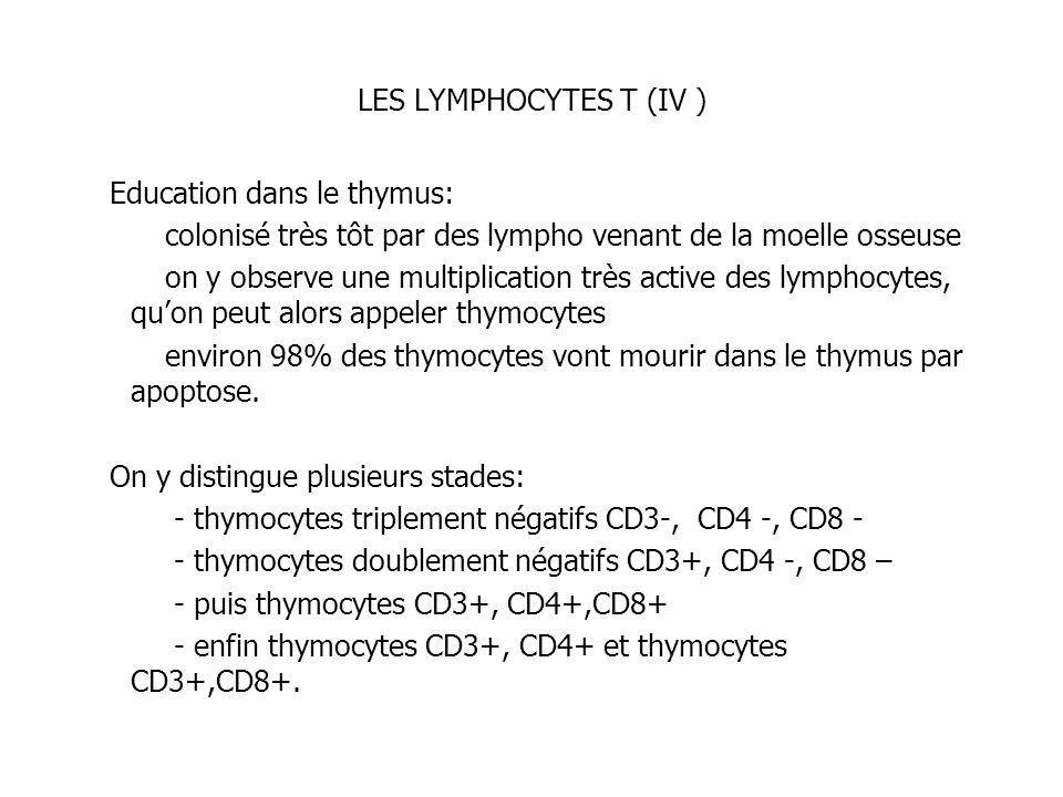LES LYMPHOCYTES T (IV ) Education dans le thymus: colonisé très tôt par des lympho venant de la moelle osseuse.
