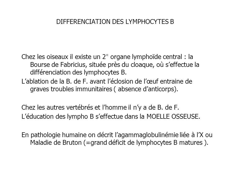 DIFFERENCIATION DES LYMPHOCYTES B