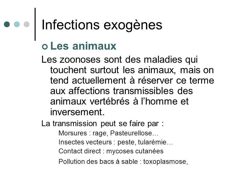 Infections exogènes Les animaux