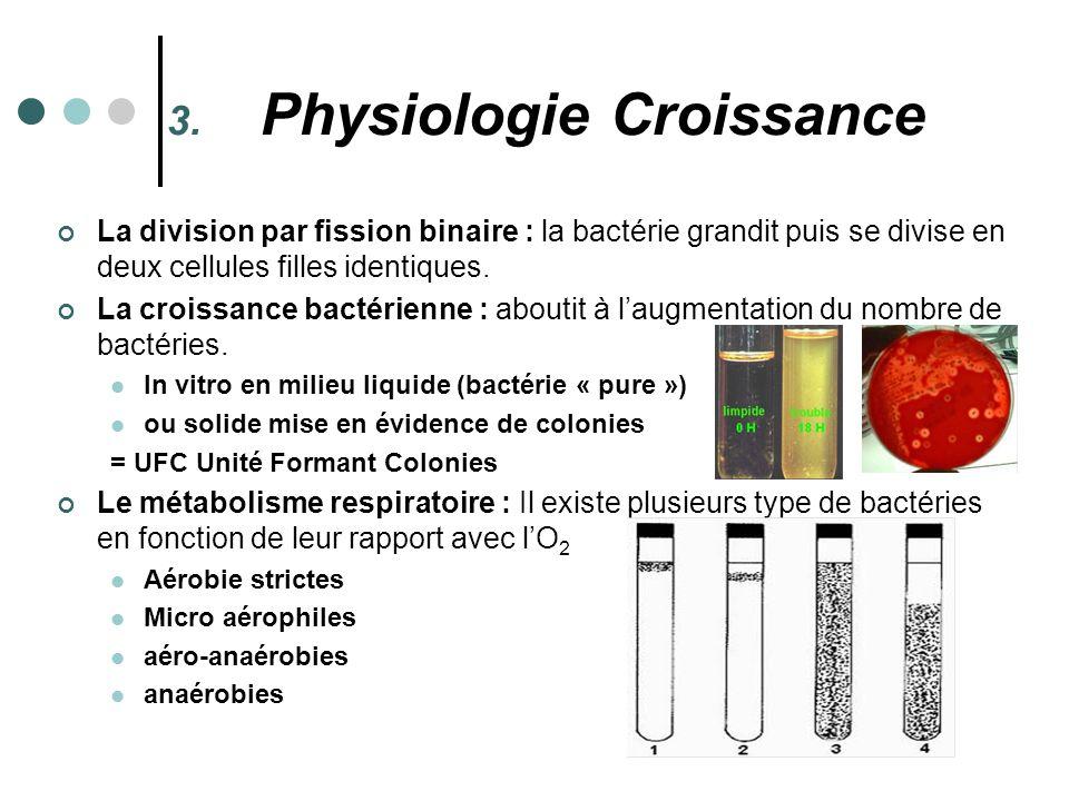 Physiologie Croissance