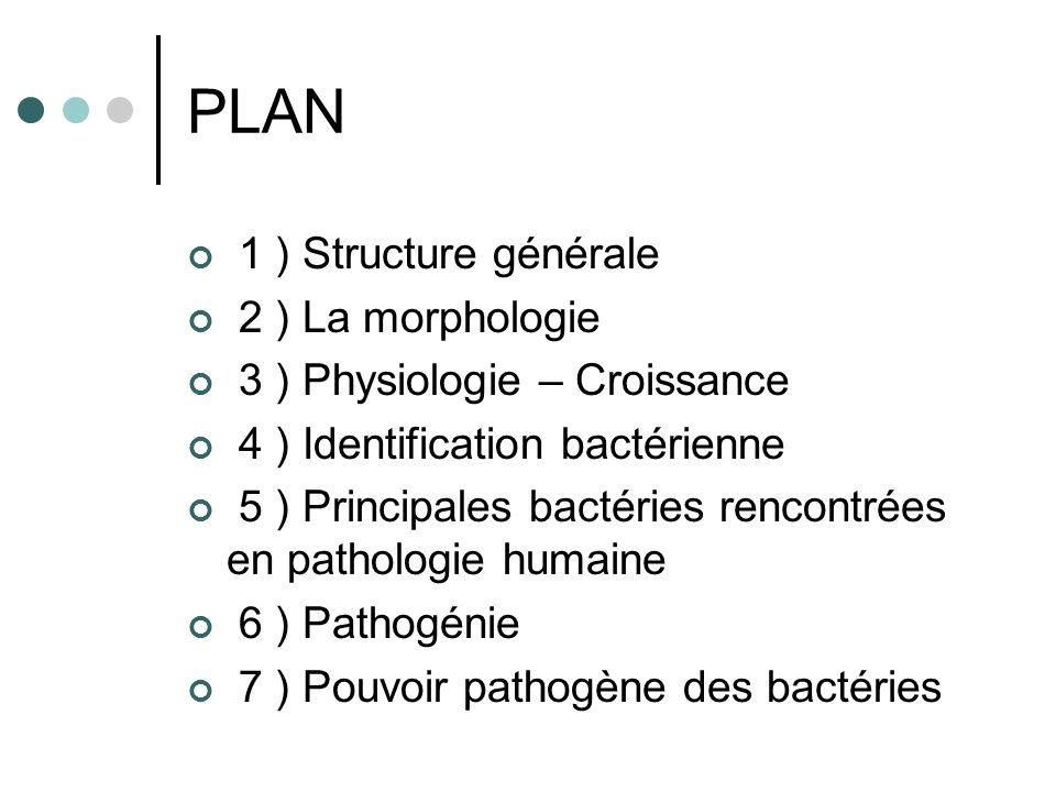PLAN 1 ) Structure générale 2 ) La morphologie