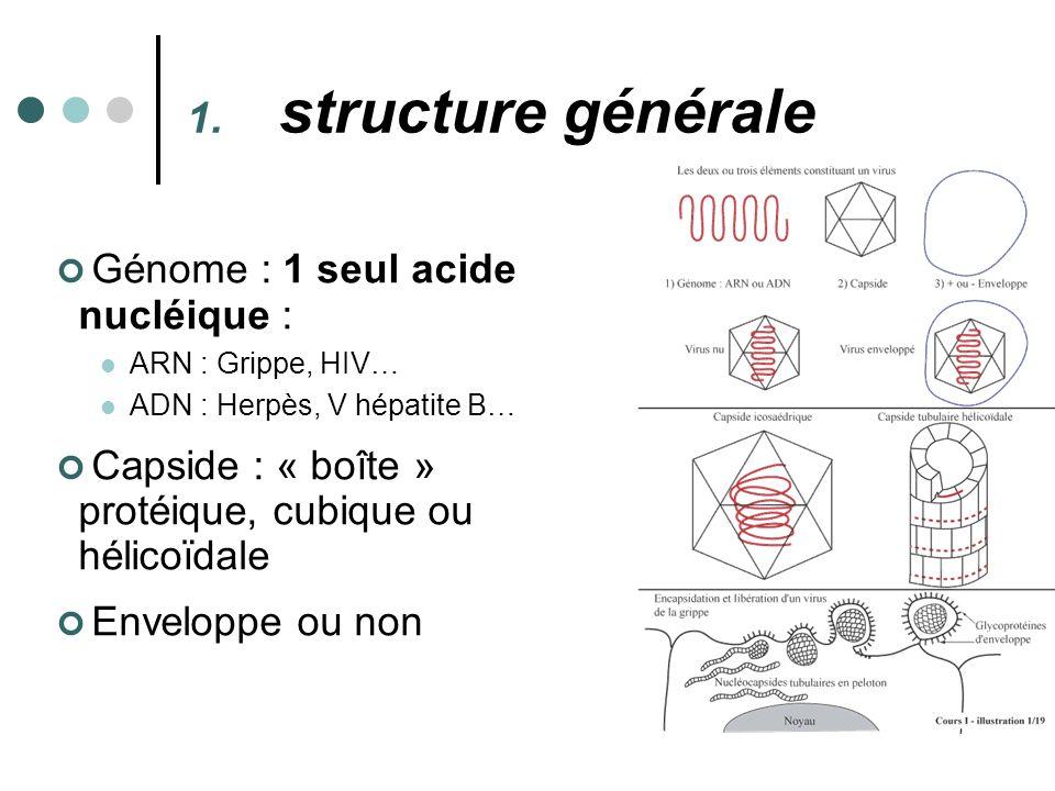 structure générale Génome : 1 seul acide nucléique :