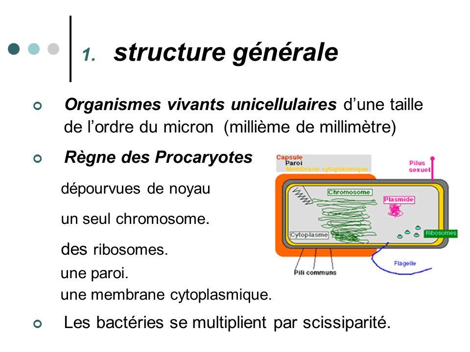 structure générale Organismes vivants unicellulaires d'une taille de l'ordre du micron (millième de millimètre)