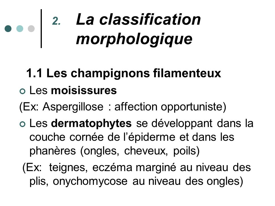 La classification morphologique