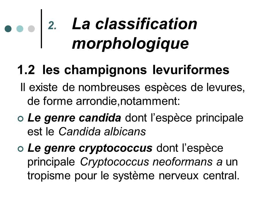 La classification morphologique