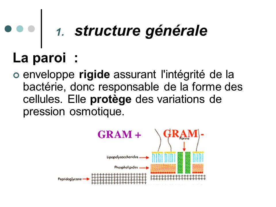 structure générale La paroi :