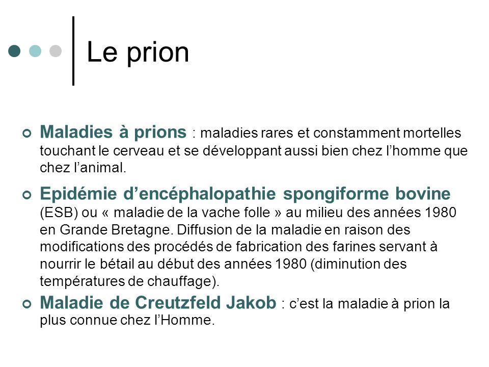 Le prion Maladies à prions : maladies rares et constamment mortelles touchant le cerveau et se développant aussi bien chez l'homme que chez l'animal.