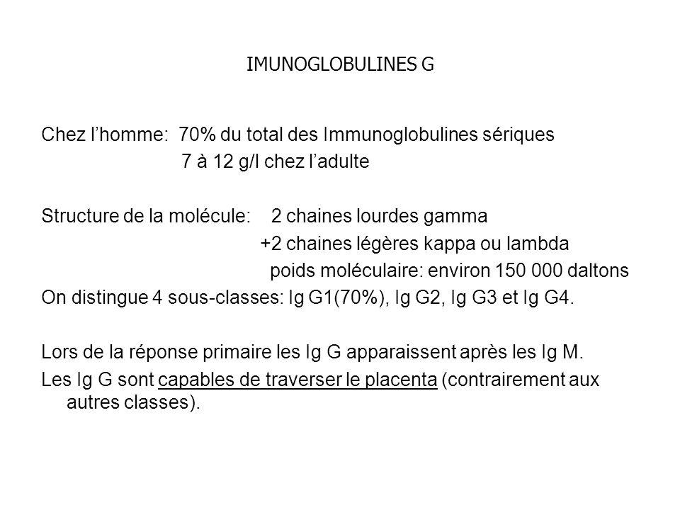 IMUNOGLOBULINES G Chez l'homme: 70% du total des Immunoglobulines sériques. 7 à 12 g/l chez l'adulte.