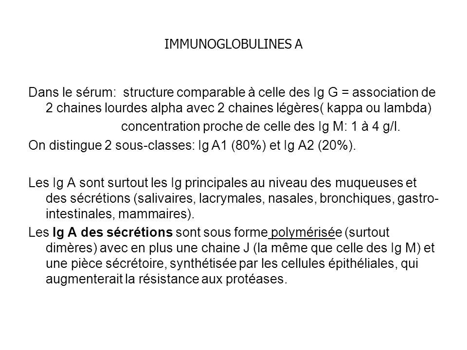 IMMUNOGLOBULINES A