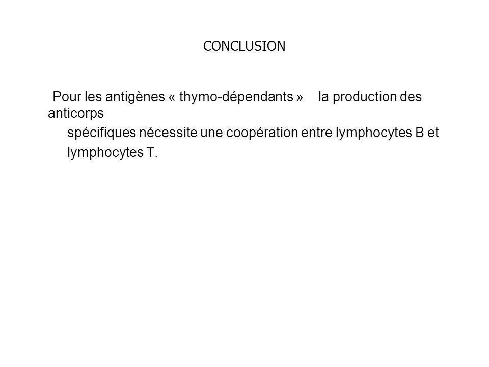 CONCLUSION Pour les antigènes « thymo-dépendants » la production des anticorps. spécifiques nécessite une coopération entre lymphocytes B et.