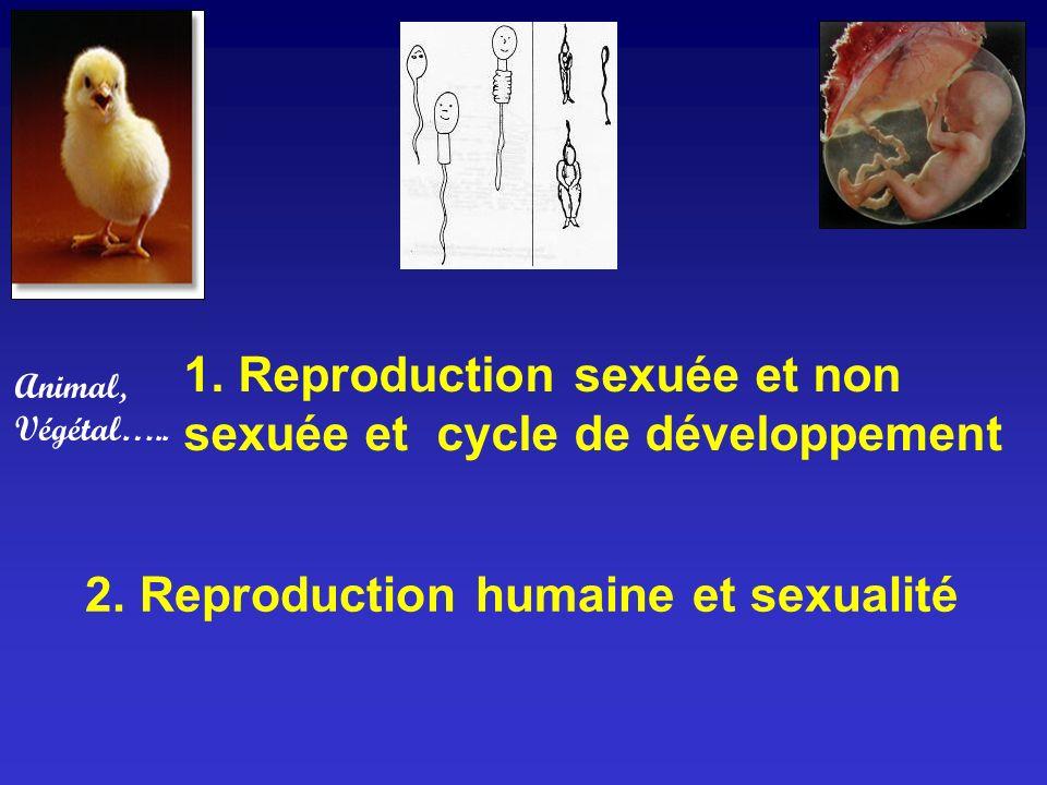 1. Reproduction sexuée et non sexuée et cycle de développement