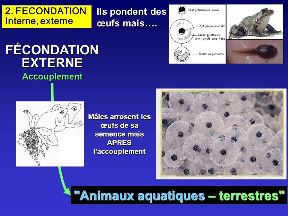 FÉCONDATION EXTERNE Animaux aquatiques – terrestres