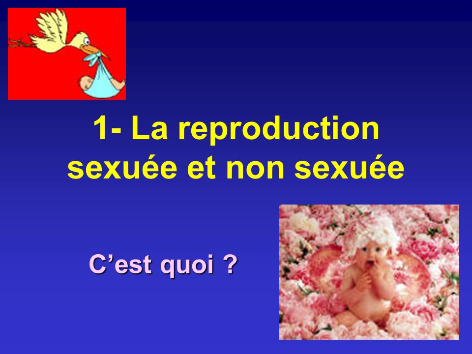 1- La reproduction sexuée et non sexuée