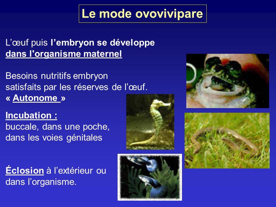 Le mode ovovivipare L'œuf puis l'embryon se développe