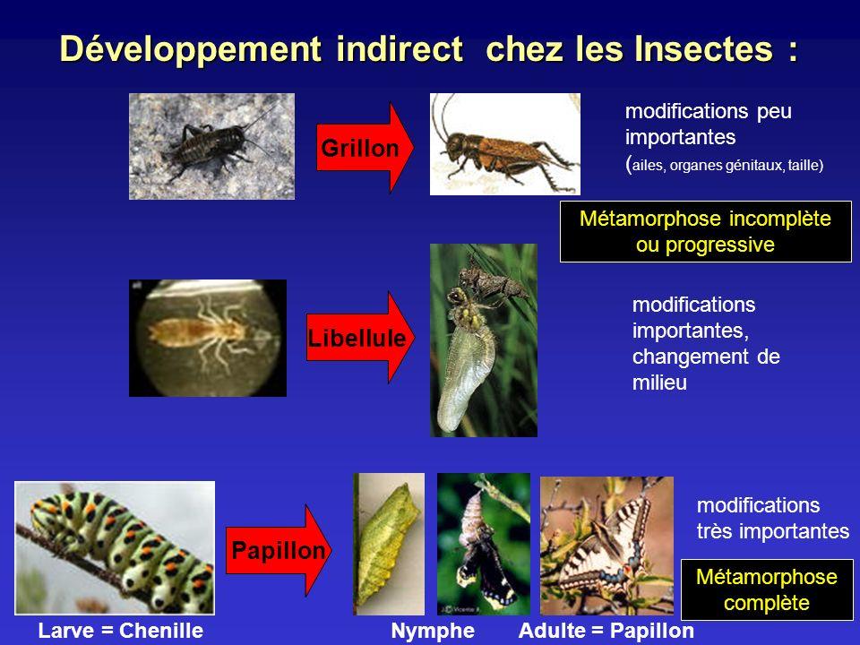 Développement indirect chez les Insectes :