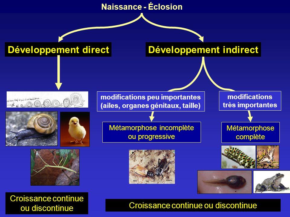 Développement indirect