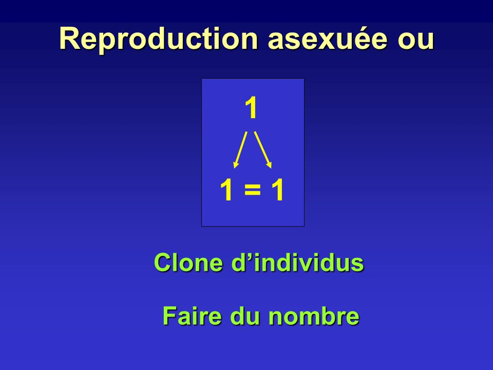 Reproduction asexuée ou