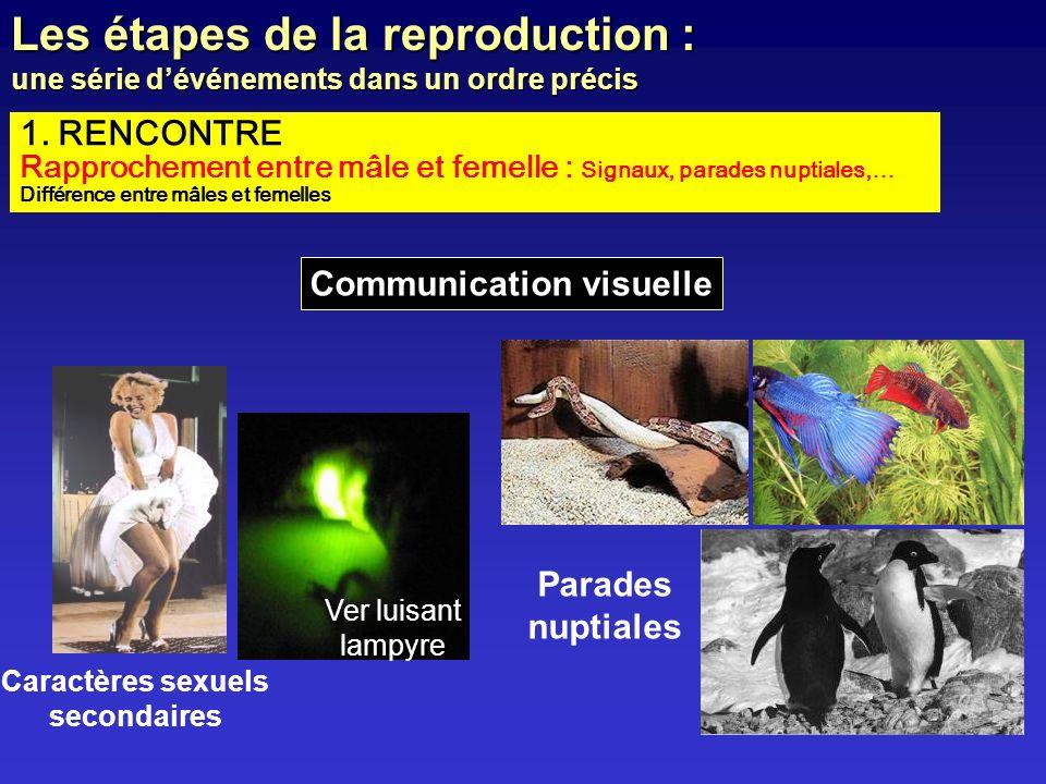 Communication visuelle Caractères sexuels secondaires