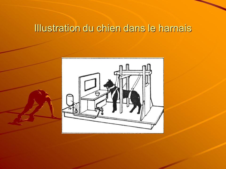 Illustration du chien dans le harnais