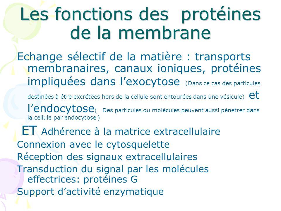Les fonctions des protéines de la membrane