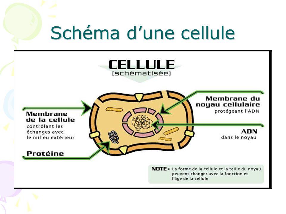 Schéma d'une cellule