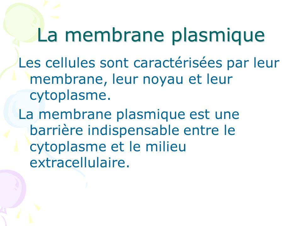 La membrane plasmique Les cellules sont caractérisées par leur membrane, leur noyau et leur cytoplasme.