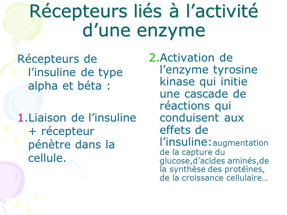 Récepteurs liés à l'activité d'une enzyme