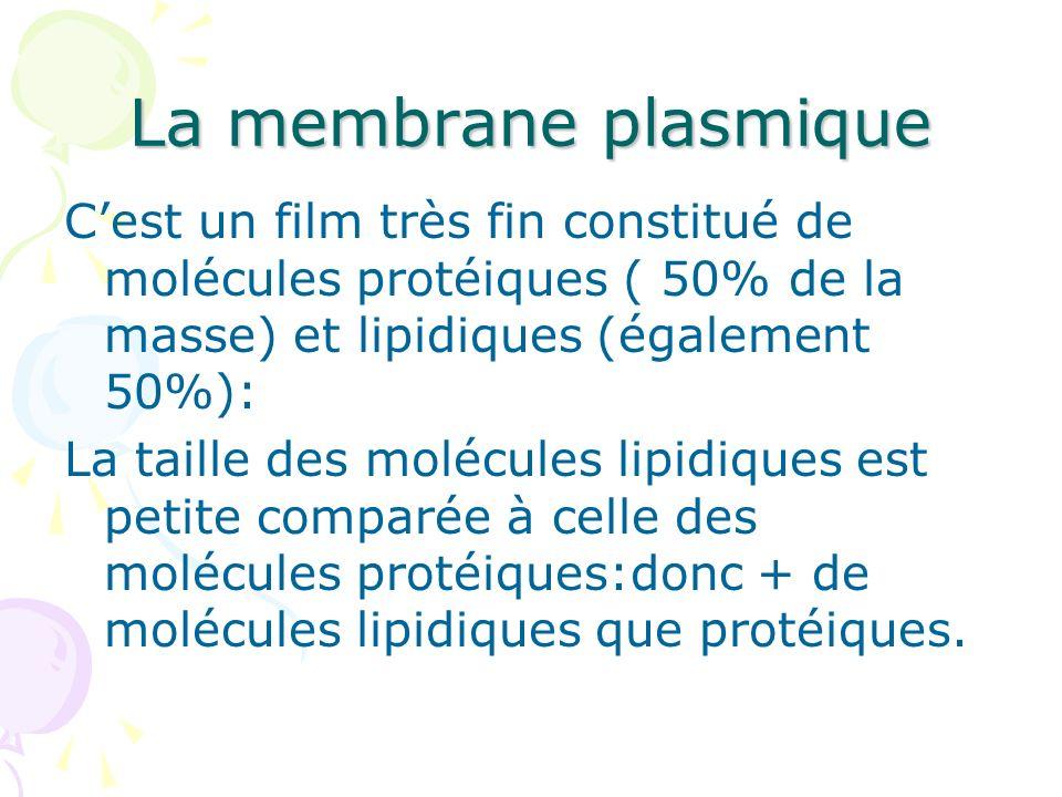 La membrane plasmique C'est un film très fin constitué de molécules protéiques ( 50% de la masse) et lipidiques (également 50%):