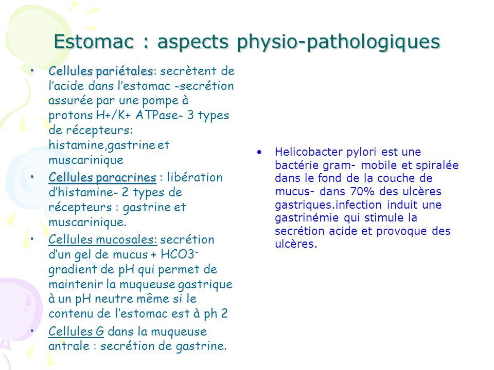 Estomac : aspects physio-pathologiques