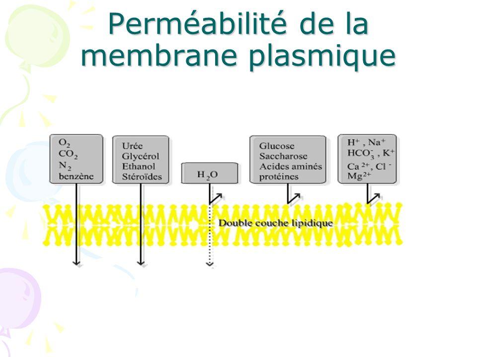 Perméabilité de la membrane plasmique
