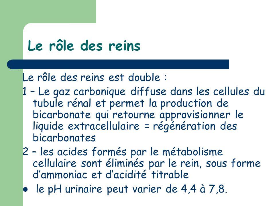 Le rôle des reins Le rôle des reins est double :