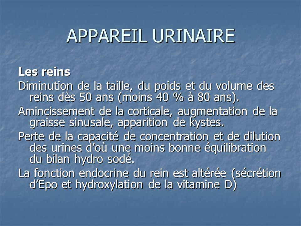 APPAREIL URINAIRE Les reins