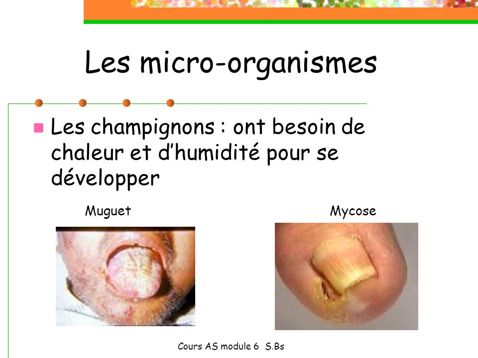 Les micro-organismesLes champignons : ont besoin de chaleur et d'humidité pour se développer.