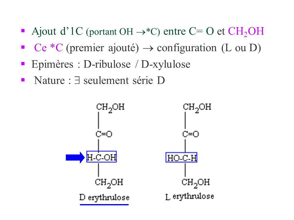Ajout d'1C (portant OH *C) entre C= O et CH2OH