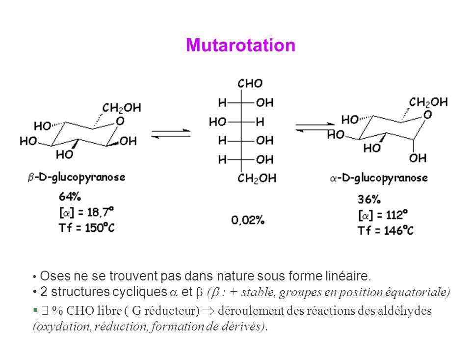 Mutarotation Oses ne se trouvent pas dans nature sous forme linéaire. 2 structures cycliques  et  ( : + stable, groupes en position équatoriale)