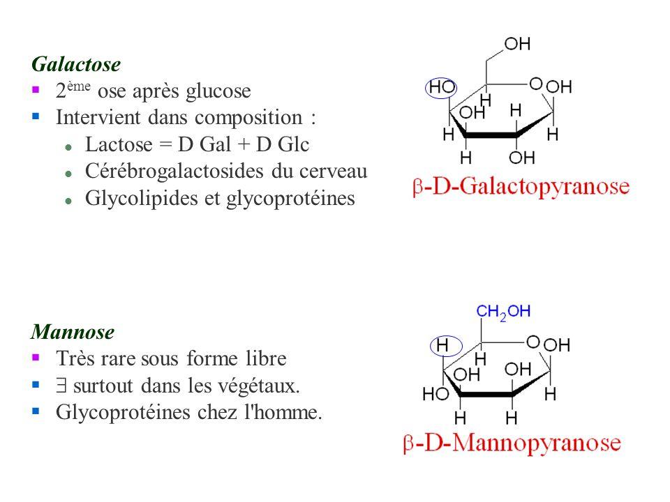Galactose 2ème ose après glucose. Intervient dans composition : Lactose = D Gal + D Glc. Cérébrogalactosides du cerveau.