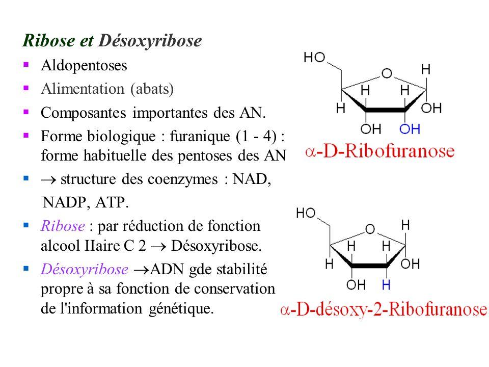 Ribose et Désoxyribose
