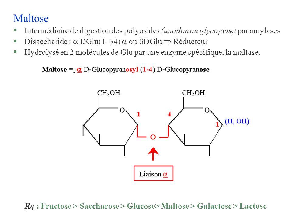 Maltose Intermédiaire de digestion des polyosides (amidon ou glycogène) par amylases. Disaccharide :  DGlu(14)  ou DGlu  Réducteur.