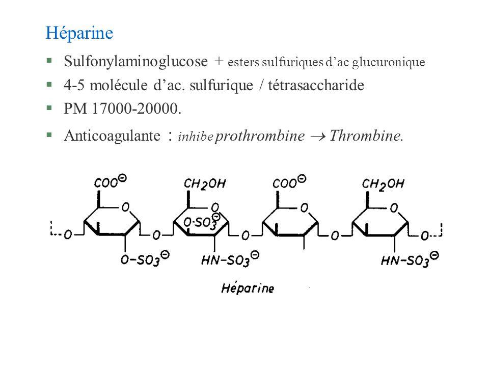 Héparine Sulfonylaminoglucose + esters sulfuriques d'ac glucuronique