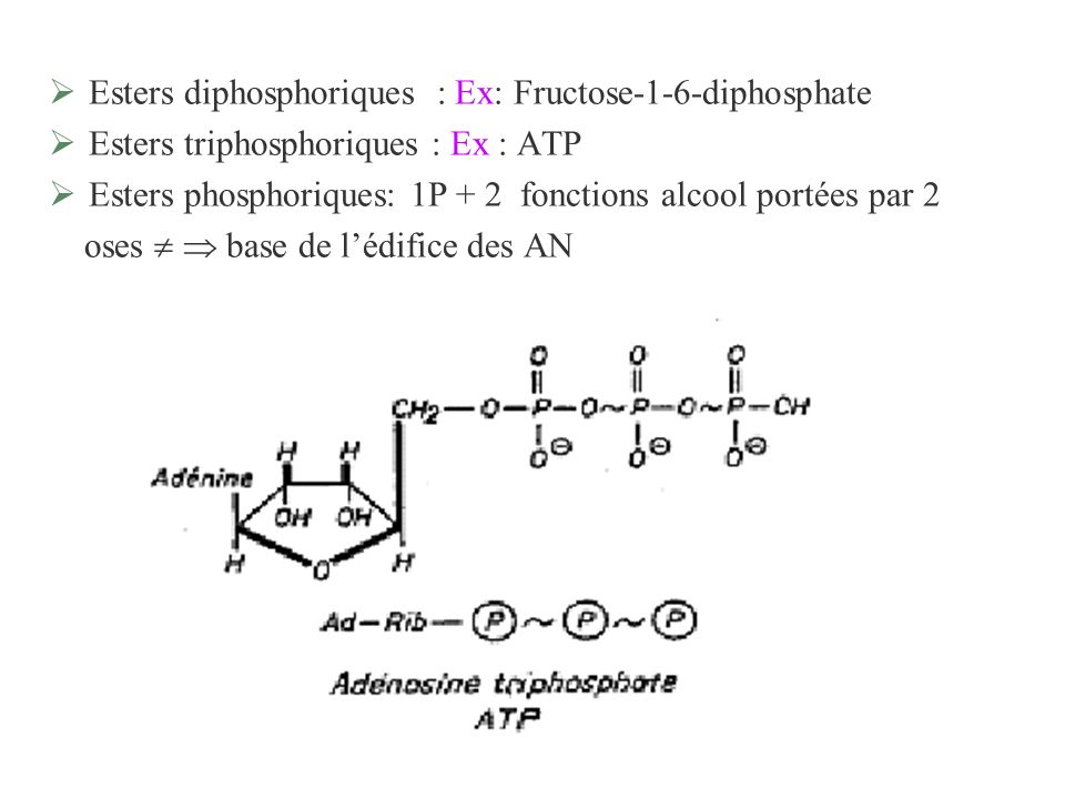 Esters diphosphoriques : Ex: Fructose-1-6-diphosphate