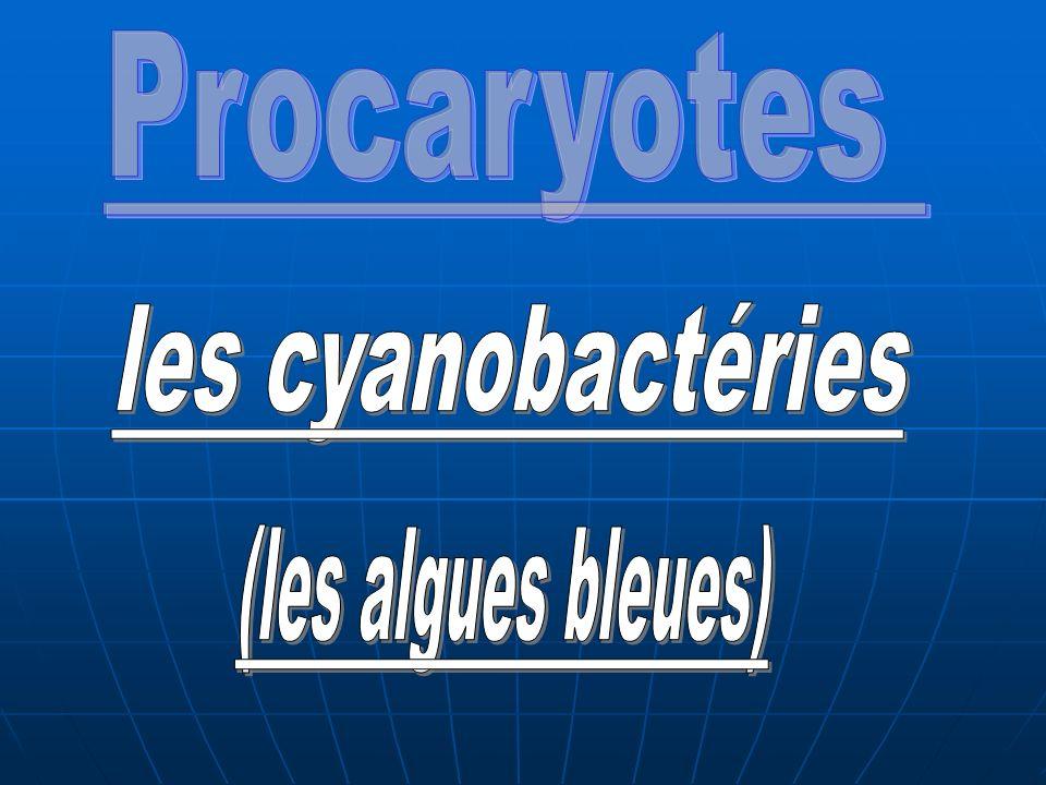 Procaryotes les cyanobactéries (les algues bleues)