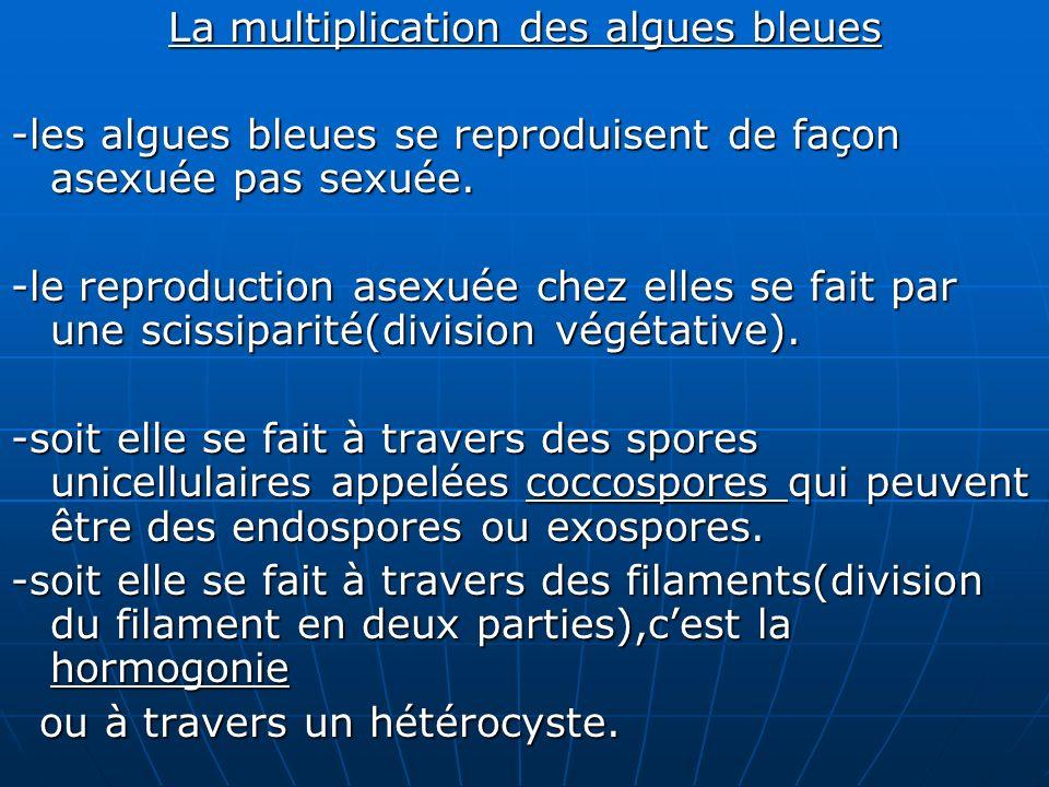 La multiplication des algues bleues
