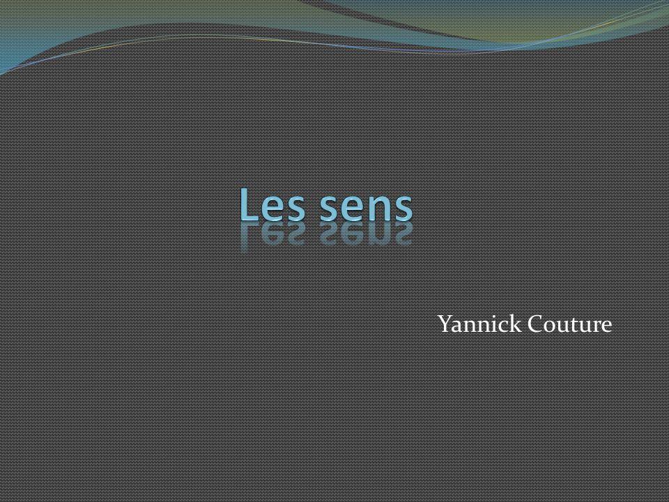 Les sens Yannick Couture