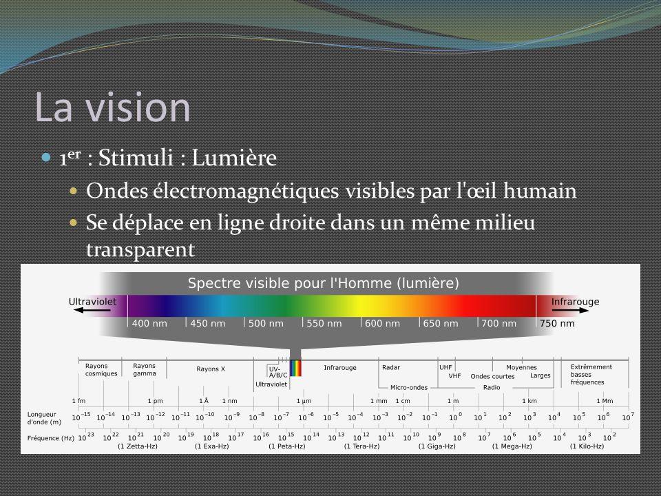 La vision 1er : Stimuli : Lumière