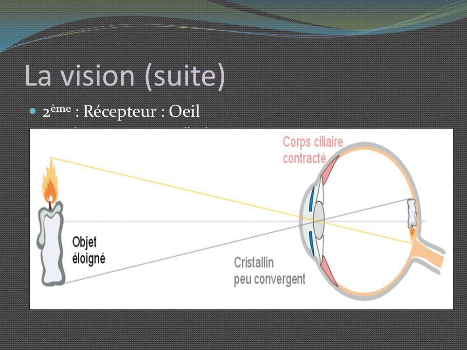 La vision (suite) 2ème : Récepteur : Oeil