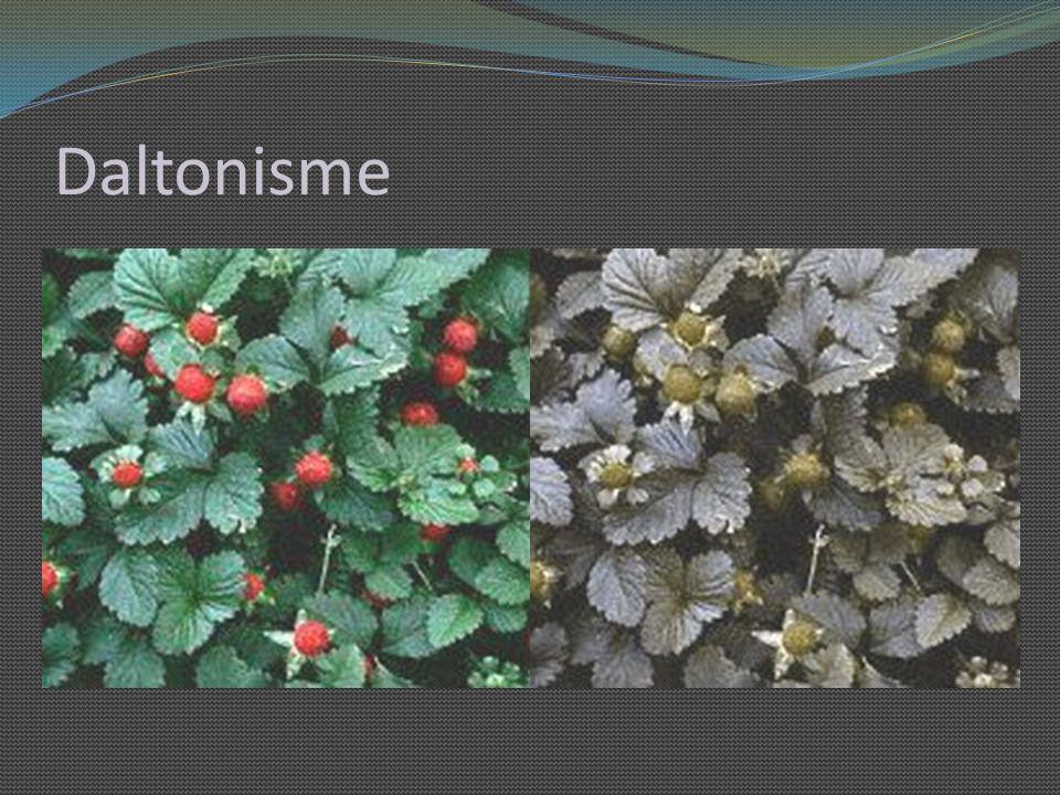 Daltonisme Trouble fonctionnel des cônes de la rétine, qui permettent la perception des couleurs. Au quotidien :